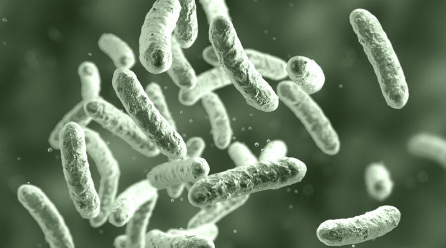 batterio-citrobacter-verona